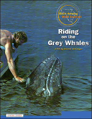 Riding on the Grey Whales